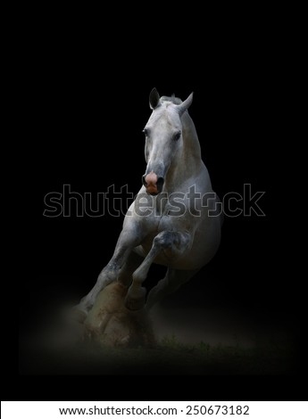 Running white stallion - stock photo