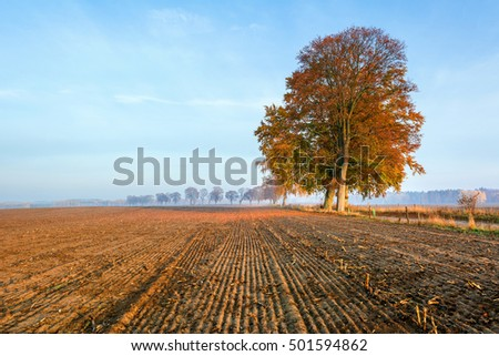 Rural autumn landscape with alone tree in the morning.