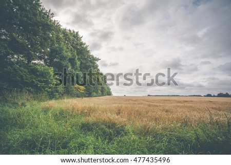 Rural countryside scenery with grain fields and cloudy sky