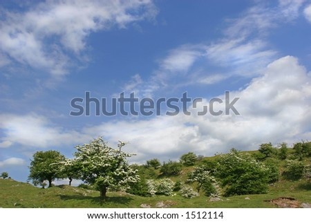 Rural countryside with hawthorn trees in blossom, set against a blue sky and clouds. Located in the Brecon Beacons National Park, Wales, United Kingdom. - stock photo