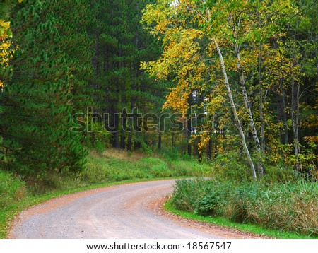 rural dirt road in the fall forest