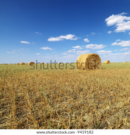 Rural field with circular hay bales. - stock photo