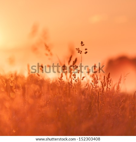 Rural grass on meadow and sunset sky