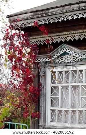 Rural house window twined with autumn wild grape liana (Parthenocissus quinquefolia) - stock photo