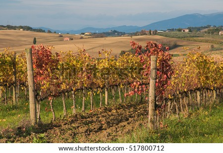 Rural land with vineyards