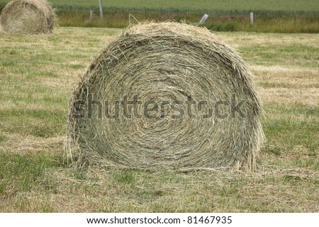 rural landscape, bales of hay in a field in spring - stock photo