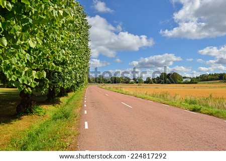Rural landscape. Country road passing by fields and old trees - stock photo