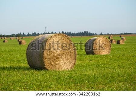Rural landscape. Haystacks in rolls on a green field - stock photo