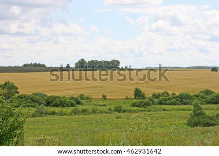 Rural landscape. In the foreground of tall plants, a pasture for cattle. In the background planted the cultivated field and the trees.
