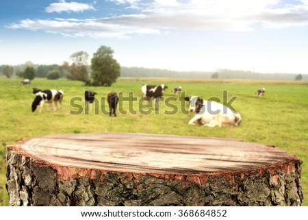 rural landscape of cows and wooden top of tree place