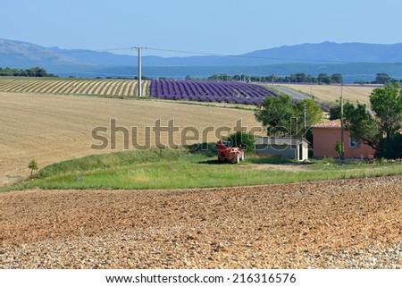 Rural landscape. Plateau of Valensole, Provence, France - stock photo