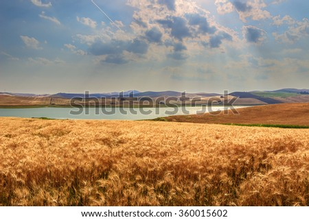 RURAL LANDSCAPE SUMMER.Between Apulia and Basilicata: Lake Basentello.Poggiorsini (ITALY) - stock photo