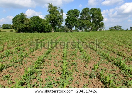 Rural Landscape View of Crops Growing in a Farmland Field - stock photo