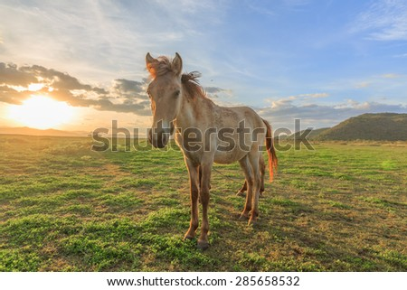 Rural landscape with grazing horses on pasture at sunset - stock photo
