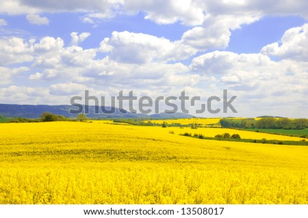 Rural landscape with oilseed rapeseed fields and bright blue cloudy sky.