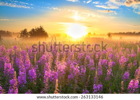 rural landscape with the sunrise  and  blossoming meadow  - stock photo