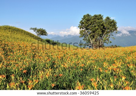 rural landscape with two trees in day-lily field - stock photo