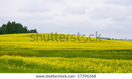 Rural landscape with yellow rapeseed field