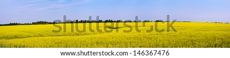 Rural landscape with yellow rapeseed field. Panoramic view - stock photo
