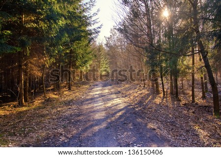 Rural lane running through the deciduous forest - stock photo