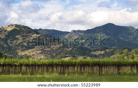 Rural Napa vineyard scene