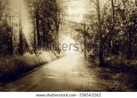 rural road and green forest with ray light in vintage  tone - stock photo