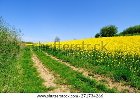 Rural road beside the rapeseed field - stock photo