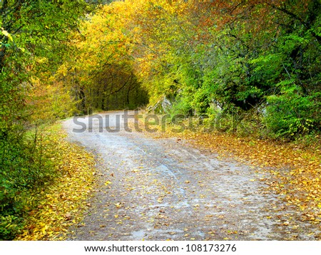 Rural road in bright autumn forest. Natural landscape - stock photo