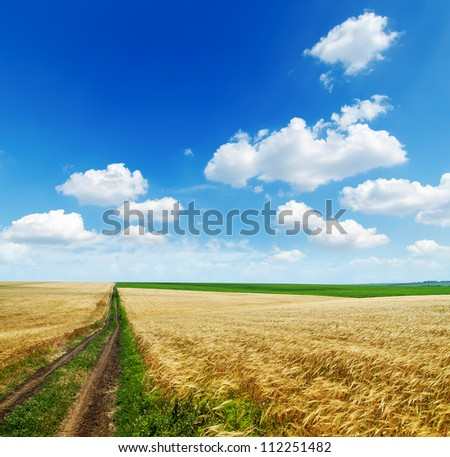 rural road in golden agricultural field under cloudy sky - stock photo