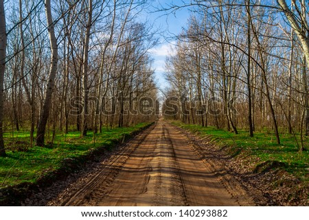 Rural road in the forest