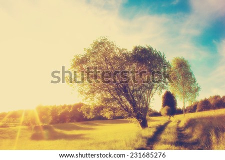 Rural Road in the Morning - stock photo
