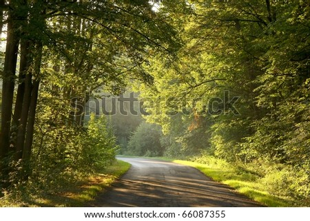 Rural road leading through the picturesque forest at the end of summer. - stock photo