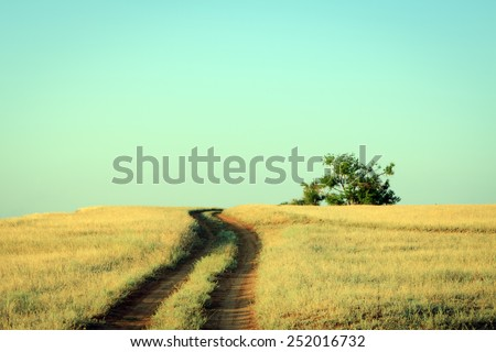 Rural road leading to a lonely oak tree in summer - stock photo