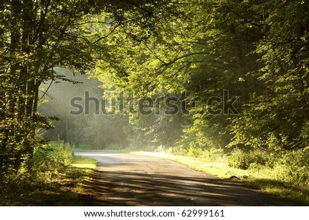 Rural road through rich deciduous forest illuminated by the morning sunlight. - stock photo