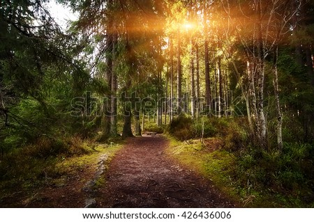 rural road through the deep green forest. natural summer background - stock photo