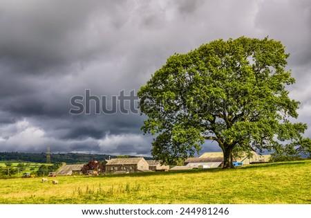 Rural scene in Cumbria - stock photo