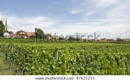 rural scenery including Mittelbergheim, a village of a region in France named Alsace - stock photo
