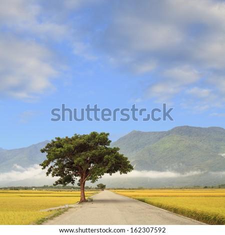 Rural scenery of green farm under blue sky, landscape in Hualian , Taiwan, Asia.  - stock photo