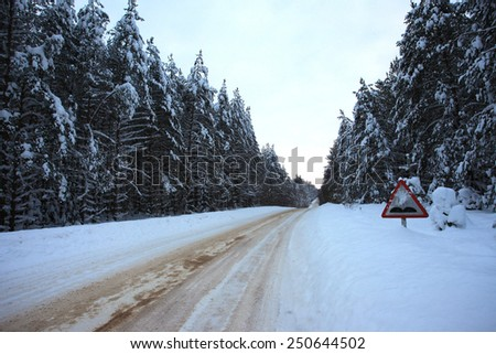 Rural snowy road in the spruce forest
