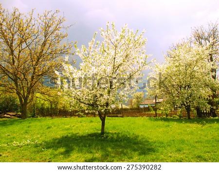 Rural spring landscape in Ukraine, around trees, fence, house - stock photo