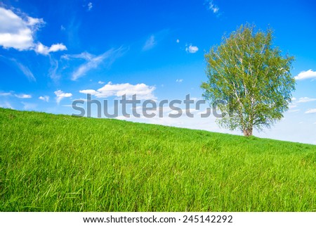 rural spring landscape with a one tree in the field - stock photo