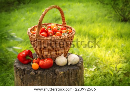 Rural still life. Freshly harvested ripe vivid tomatoes of different varieties in wicker basket, onion and pepper on a stump in  the yard with space for text on backdrop of sunlit lawn. Close-up view