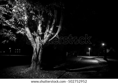 Rural street scene at night, black and white with trees lit by lamp post. Empty streets in Autumn