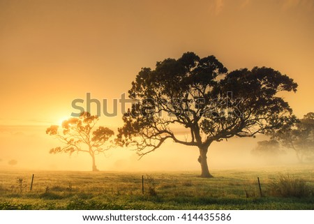Rural sunrise on a misty morning - stock photo