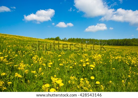 Rural views to the flower meadow and the blue sky. Pastoral panorama of nature spring. Undulating terrain in the style of the Window. Beautiful landscape of a Sunny day. Field with yellow dandelions. - stock photo