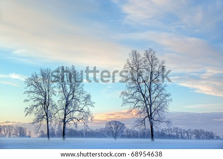Rural winter landscape of lightly frosted trees and ground fog, Michigan, USA - stock photo
