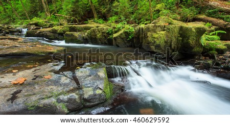 Rushing Stream in Forest in Fall