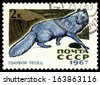 RUSSIA - CIRCA 1967: a stamp printed by Russia shows Arctic Blue Fox,  Fur-bearing  Mammals,  circa 1967 - stock photo