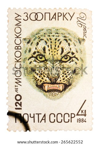 RUSSIA - CIRCA 1984: A stamp printed in Russia, shows Snow leopard in Moscow Zoo, 120th Annivarsery series, circa 1984. - stock photo