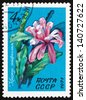 RUSSIA - CIRCA 1971: a stamp printed in the Russia shows Flowering Crab Cactus, Schlumbergera, circa 1971 - stock photo